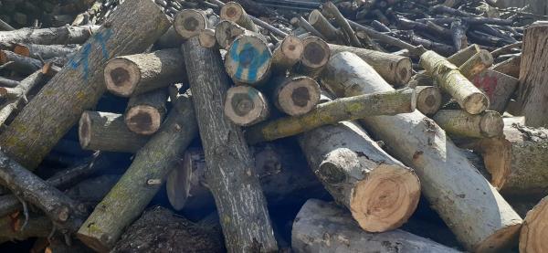 خبرنگاران فراوری چوب حرارتی با حمایت صندوق نوآوری و شکوفایی